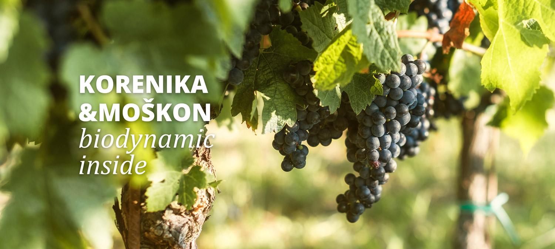 biodinamični vinograd v osrčju slovenske istre